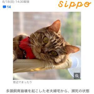 朝日新聞、ヤフーニュース、Sippo 友子ちゃん掲載(⸝⸝⸝ᵒ̴̶̷̥́ ᴗ ᵒ̴̶̷̣̥̀⸝⸝⸝)