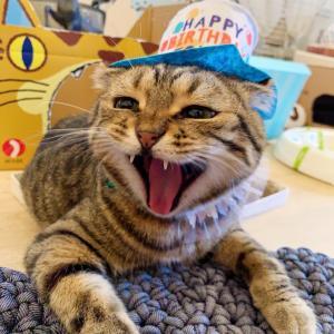 ティノちゃん お誕生日おめでとう【アクティブ ママ】