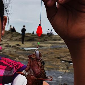 【学び】魚釣りは学びになるのか!