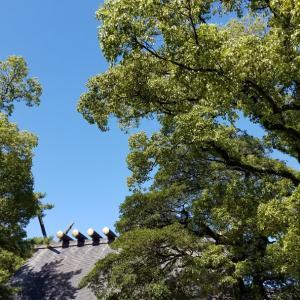 9月9日重陽の節句熱田神宮参拝「後ろ姿」その1