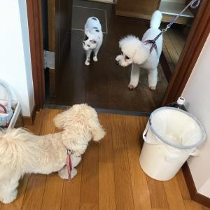 犬、猫、人間、ふれあい感謝