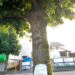 街路樹さん、ありがとう