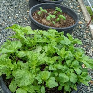 家庭菜園を楽しみつつ、食のエネルギーを感じる