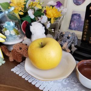 クッキー君にリンゴをお供え&ドリー君、小学生の女の子とスキンシップ