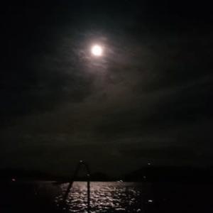 H29.104 広島湾 ナイトアオリイカ釣り