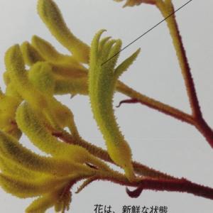 植物の面白い名前、動物の名前がついたドライフラワー