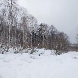 藪でした。