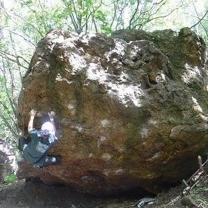 新緑の木漏れ日岩