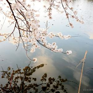 新発田市・桜公園〜聖籠町・弁天潟風致公園