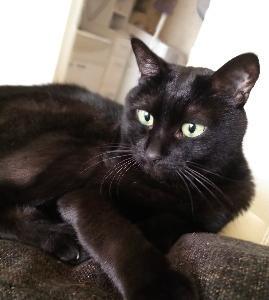 お姫さまの黒猫。