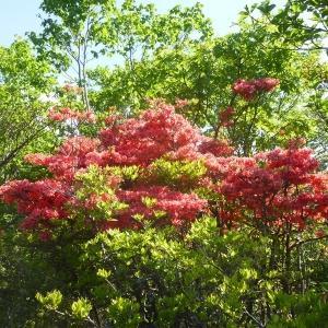 花の季節には花を見に行きましょう。釈迦が岳1794m