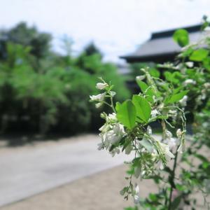 梨木神社のこぼれ萩
