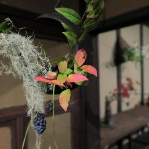 京町家、神無月の花会の続き