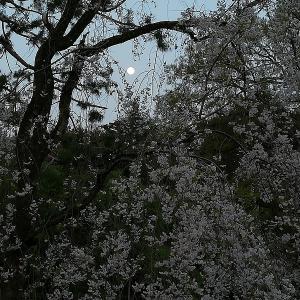第一話・桜の彼方(序章)