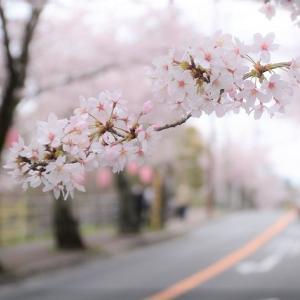 第一話・桜の彼方 一章