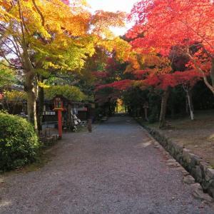 大原野神社、鯉沢池の紅葉