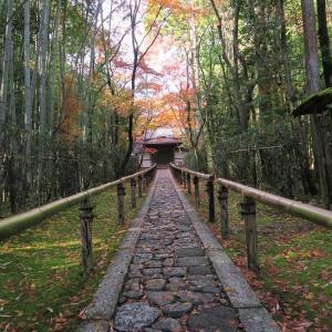 市井の紅葉、大徳寺の場合