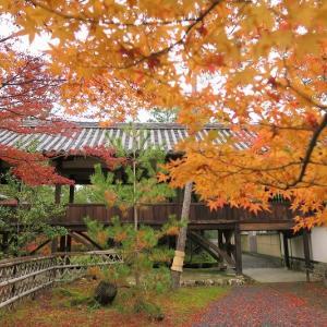 市井の紅葉、清涼寺の場合