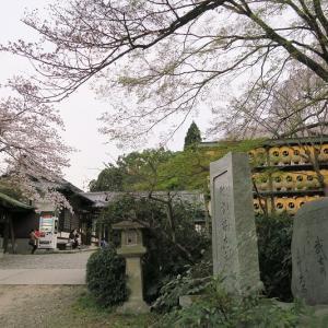 大石神社、大石桜のライトアップ