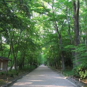 下鴨神社、新緑の糺の森を歩く