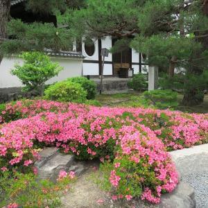 東福寺通天橋の新緑