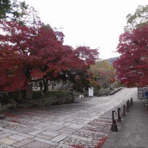 京都2020紅葉 金戒光明寺 栄摂院見頃