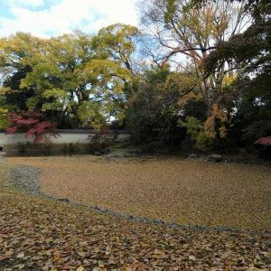 2020紅葉 京都御苑の紅葉、もしくは黄葉