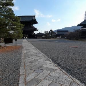 梅の匂いに誘われ嵯峨野清凉寺