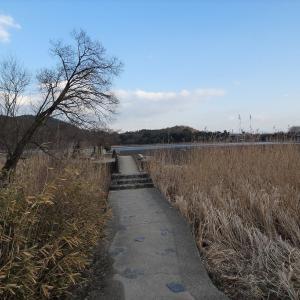 広沢池の鯉揚げ 幻の川、カメラ 鶴