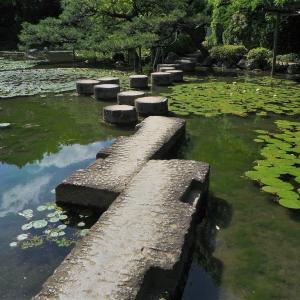 南禅寺の牧護庵、気ままな睡蓮考