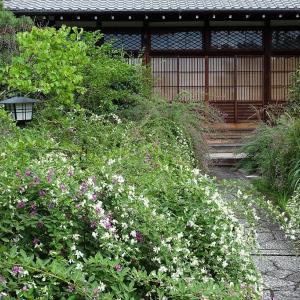 梨木神社、常林寺の萩