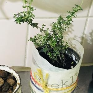 緑のある暮らし…プレゼントハーブと多肉植物デビュー