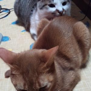猫たちのいる生活