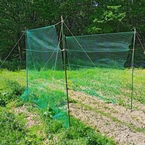 今日は、畑のネット張り