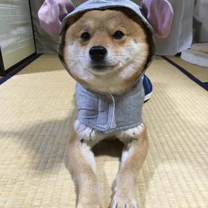 ねずみチューチューワンコ服☆