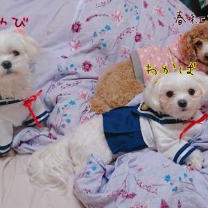 3匹の多頭飼い気分を満喫中(*´∀`)♪