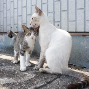 キジ白の子猫