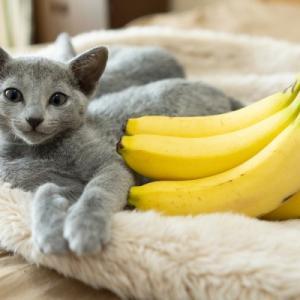 バナナ大好き