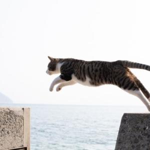 猫写真展の予定
