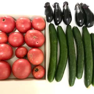 実家からたくさんの夏野菜が届きました