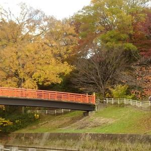 竜田川の紅葉♪