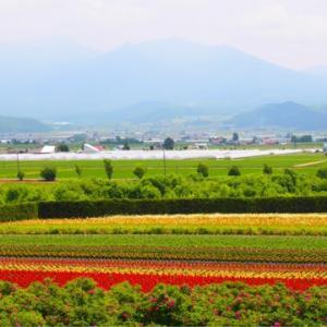 四季彩の丘と富田ファームにお花をみにいきました(≧∀≦)