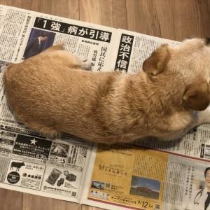 新聞の上…?
