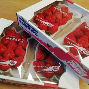 またまた苺が到着♪のふるさと納税レポート&ポチレポ続き。