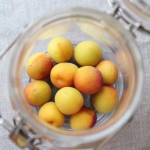 今年も梅仕事♪ 甜菜糖&黒酢使用の梅シロップ作り。