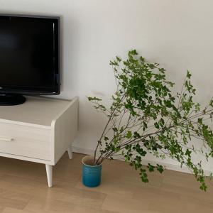 新居のテレビボード 背面コード無し!
