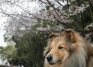 春 なんだかんだ出かけたくなります