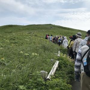 利尻島礼文島旅行⑦2日目礼文島ハイキングその2