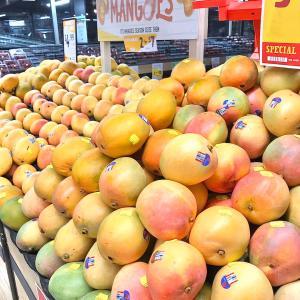 オーストラリアにマンゴーの季節がやってきた