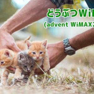 どうぶつWiFi【advent WiMAX2+】の料金やキャンペーン情報を徹底解説!
